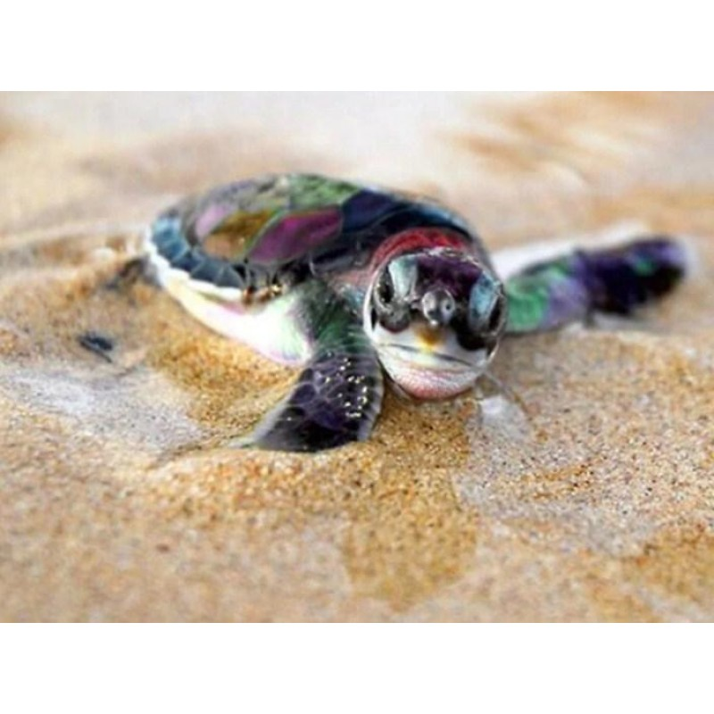 Baby Turtle - Paint ...