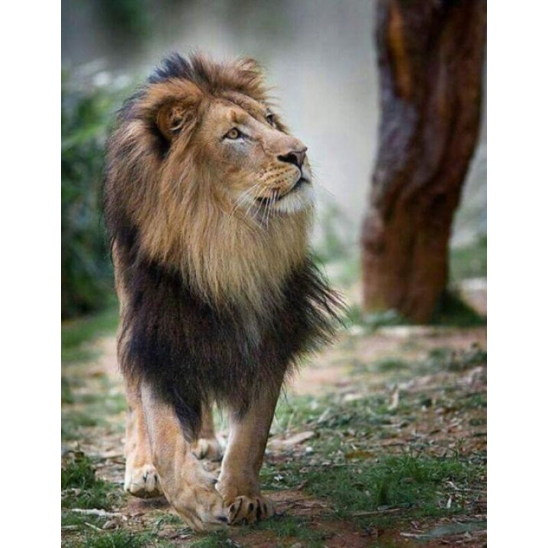 Beautiful Lion with ...