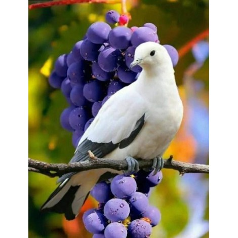 Beautiful Dove & Bunch of Grapes