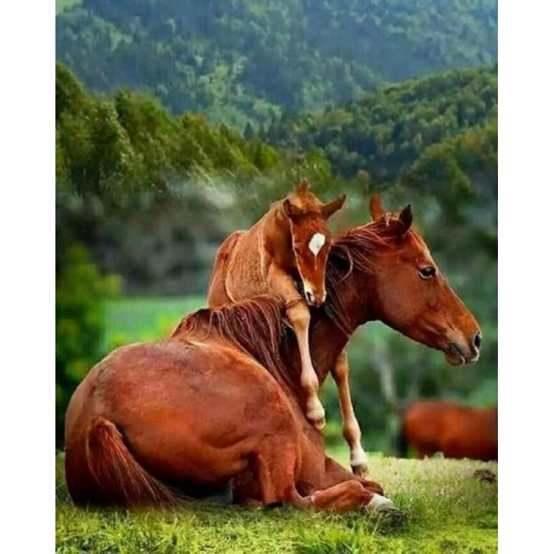 Baby Horse with Mare