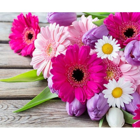 Transvaal Daisies - Paint by Diamonds